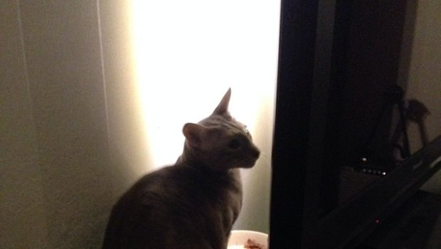 Eat behind the TV rocks! #cat #damncat #oriental