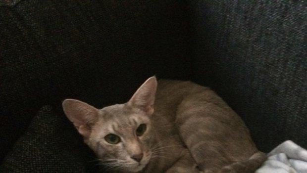 Cat-in-a-corner
