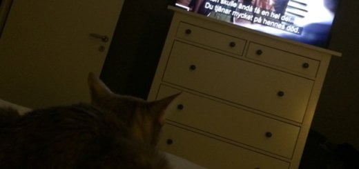She's watching The Mentalist. Do not disturb