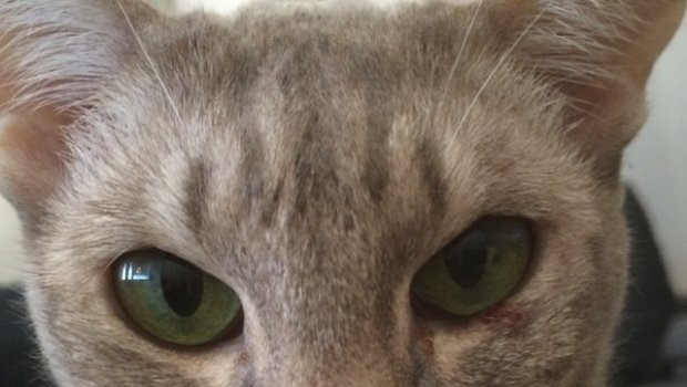 My little eye scratching stupid friend