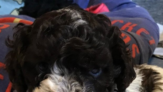 Hi. This is me. Mac. I'm just 5 weeks old in this photo and it's still 3 weeks until I get to move to my mum and dad. That is in just 3 days now when this first post is made