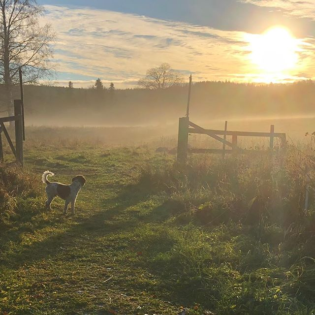 Saturday morning mist is exciting. #maclagotto #lagottoromagnolo #lagotto #dogs #lagottos #lagottosofinstagram #lagottopuppy #lagottolove #lagottostyle #lagottodogs #lagottoromagnolos #dpotd  #lagottoboy #svärdsjö #dalarna #sweden #dog #dogmodel #dogmodels #dogsofinstagram #dogsofinsta  #doglovers #daddysdog #dogstagram #pappajagvillhaenitalienare @knappare @liminglindblad @k.rowntree @taxen_coco posted by dad: @kristerlindholmfalun